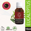 Avnii Organics Natural and Therapeutic Grade Eucalyptus Essential Oil for Beautycare15 ml(#1916) - getkraft.com