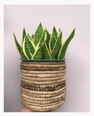 Banana fiber Planter Style 1(#2171)-gallery-0