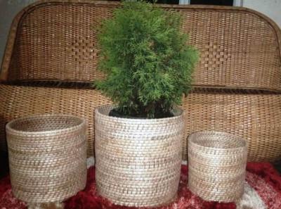 Cane Round Planter Set of 3(#2292)-gallery-0