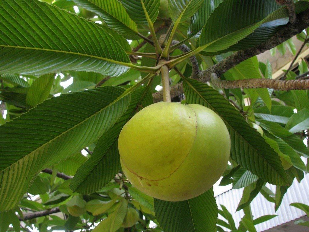 Ow Tenga - Elephant Apple Pickle 300g(#752)-gallery-1