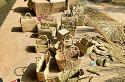 Different varieties of eco friendly natural straw kauna products drying process